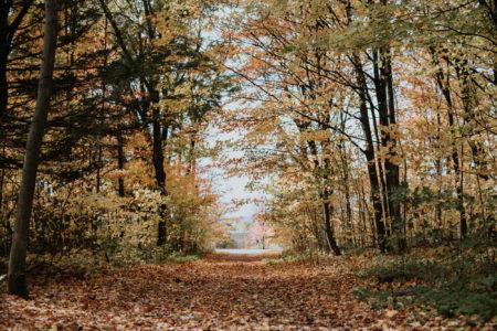 Documenting Autumn